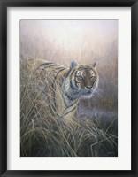 Framed Tiger At Dawn