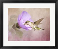Framed Taste of Nectar Hummingbird