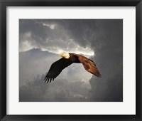 Framed Above The Storm Bald Eagle