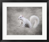 Framed Albino Squirrel