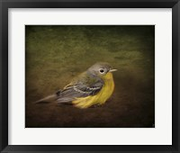 Framed Baby Warbler
