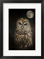 Framed Barred Owl And The Moon