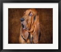 Framed Bloodhound Portrait