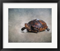 Framed Box Turtle Portrait