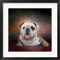 Framed Bulldog Hanging Out