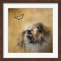 Framed Butterfly Dreams Pomeranian
