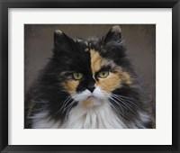 Framed Calico Cat Portrait