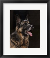 Framed Classic German Shepherd