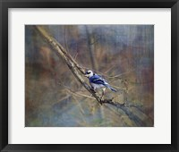 Framed Color My World Blue Jay