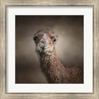 Framed Eat Your Veggies Camel