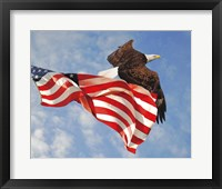 Framed Flight of Freedom Bald Eagle