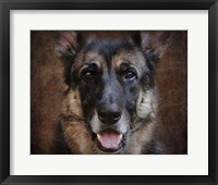 Framed German Shepherd Face