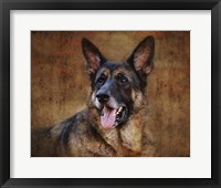 Framed German Shepherd