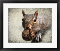 Framed Gray Squirrel With Nut
