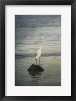 Framed Great White Egret At Sunrise