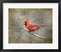 Framed His Red Glory Cardinal