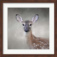Framed Little Miss Lashes White Tailed Fawn