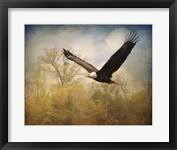 Framed Monarch Of The Skies Bald Eagle