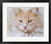 Framed Orange Tabby Cat Portrait