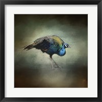 Peacock 10 Framed Print