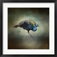 Framed Peacock 10