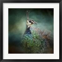 Framed Peacock 12