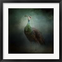 Framed Peacock 2
