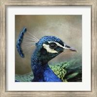 Framed Peacock 3