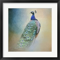Peacock 4 Framed Print