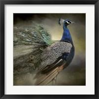 Framed Peacock 5