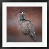 Framed Peacock 7