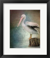 Framed Perched Pelican