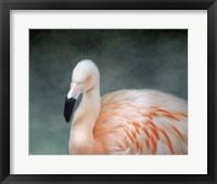 Pink flamingo 3 Framed Print