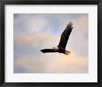 Pinson Mounds Eagle 1 Framed Print