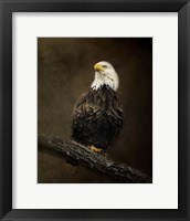 Framed Portrait Of An Eagle