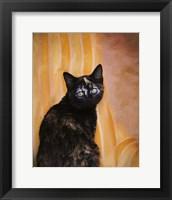 Framed Royal Kitten