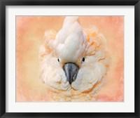 Framed Salmon Crested Cockatoo Portrait 2