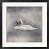Framed Swan Storm