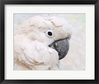 Framed Umbrella Cockatoo Portrait