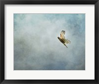 Framed Up Up And Away Red Shouldered Hawk