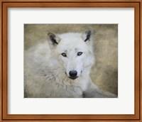 Framed White Wolf Portrait