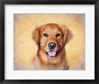 Framed Young Golden Retriever Portrait