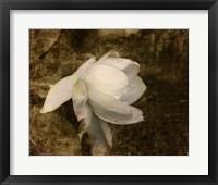 Framed Cape Jasmine Gardenia 1