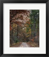 Chickasaw Forest In Autumn 1 Framed Print