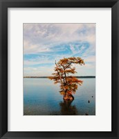 Cypress In Autumn 1 Framed Print