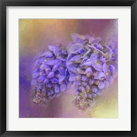 Framed Enticing Wisteria