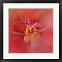 Framed Salmon Hibiscus 1