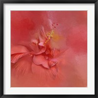 Framed Salmon Hibiscus 2