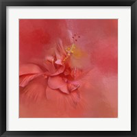 Framed Salmon Hibiscus 2