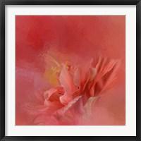 Framed Salmon Hibiscus 3